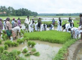 Std 8 & 9 Interdisciplinary Field Trip – Paddy Field ,Gandhi Smrithi and Dairy Farm