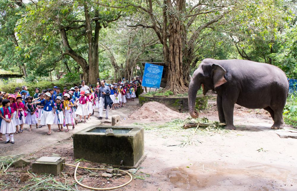 Best-CBSE-School-In-Kerala-Std 1 & 2 Interdisciplinary Field Trip - Guruvayur Elephant Sanctuary Visit.