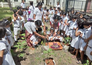 Kerala-KG Experiential Learning – The Harvest